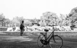 Sukhothai Sheppard Cows & Bike