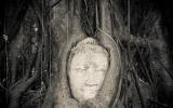 Ayutthaya Buddha Face