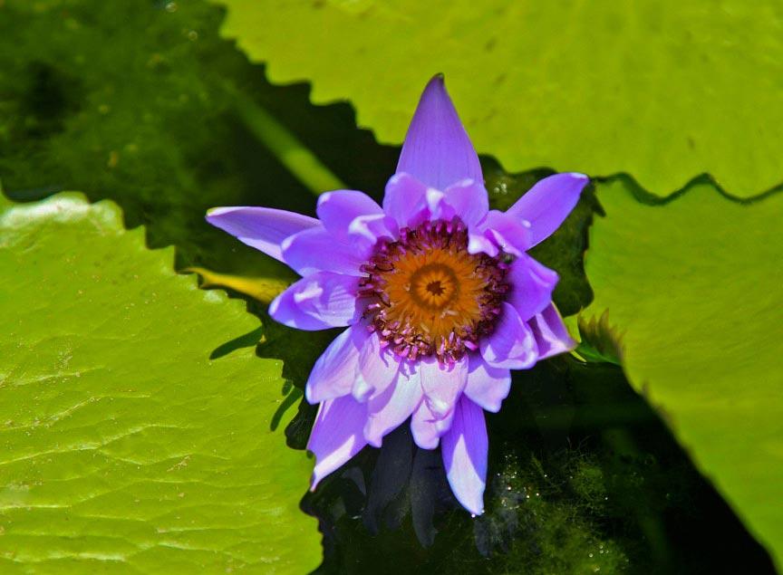 Photography Tour in Bangkok, Lotus Flower